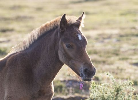 New Forest Pony Foal 'Lucky Heather' Greetings Card